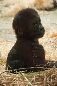 Blijdorp Zoo in Rotterdam een van de mooiste dierentuinen in Nederland