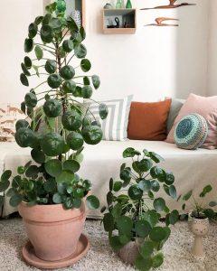 Verzorging van je plant