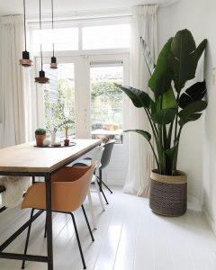 Zorg dat je grote kamerplant voldoende ruimte heeft