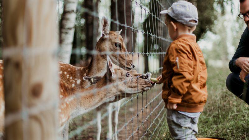 de dierentuin